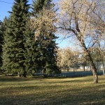 Optimist Park Trees