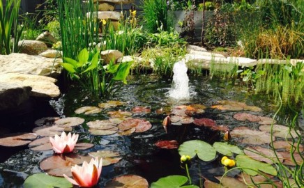 June 2015 – Our Beautiful Pond!